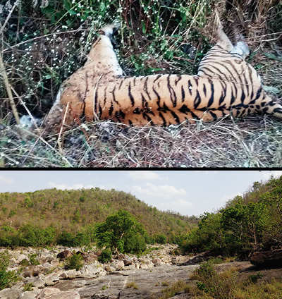 ELECTROCUTION THE NEW WEAPON FOR POACHERS ON THE PROWL