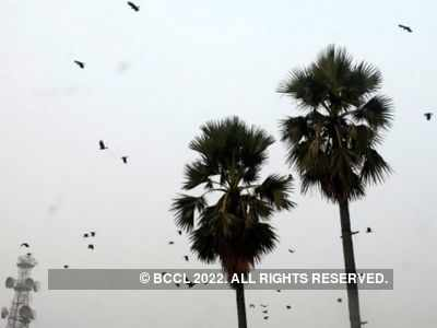 Nearly 400 crows found dead in Madhya Pradesh, 3 districts reported bird flu