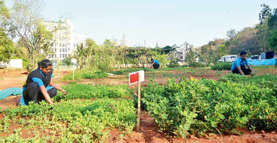 This IT firm in Domlur grows its own veggies