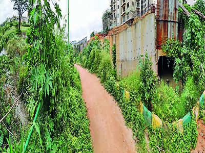 Lake revival worth Rs 5cr has gone to the weeds