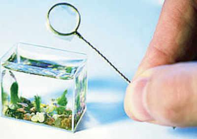 Man creates world's smallest aquarium