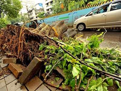 45-year-old man dies as tree collapses on auto in Mulund