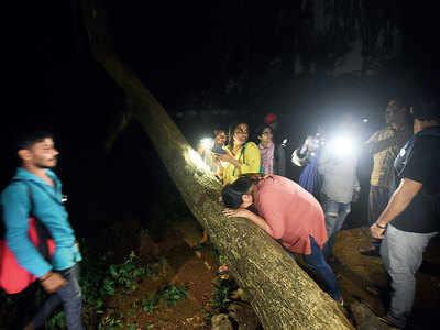 Decision to cut down 2,646 trees fair: HC