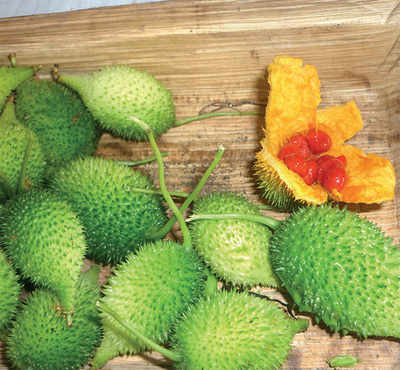 The greenskeeper: Teasel gourds
