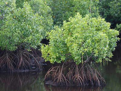 Thane fisherfolk demand desilting of mangrove ponds