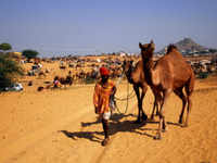 Rajasthan: Two-day camel fair to go underway at Bikaner today