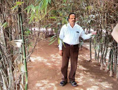 Chhota Bheema is growing at a field near you