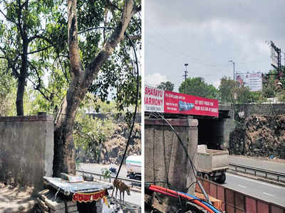 3 trees meant for transplant felled; PMC blames 'miscommunication' with contractor
