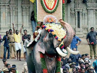 One-eyed celebrity tusker opens Thrissur Pooram festival