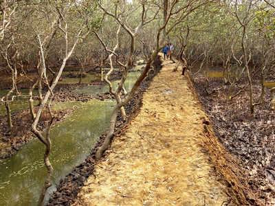 Sea water supply cut off to kill mangroves: Activist