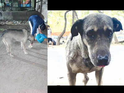'Need to file an FIR in animal cruelty case? Do it yourself'
