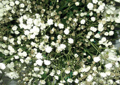 The greenskeeper: Baby's Breath