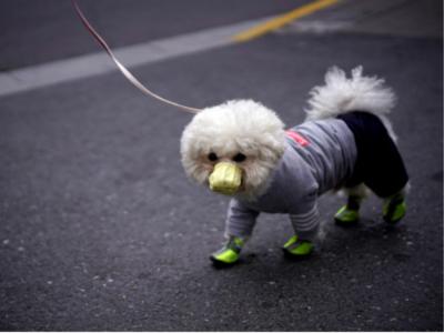 Shocking! Pet dog infected with coronavirus in Hong Kong