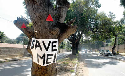 You have exactly 10 days to save 112 trees on Jayamahal Road