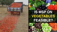 Crisis in Indian agriculture explained: Why farmers are destroying their tomato crop