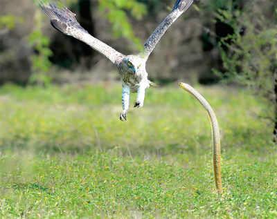 Bengalurean goes, where eagles dare