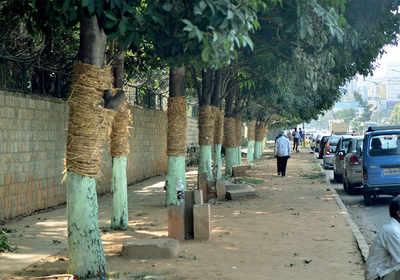 Namma Metro's green run will save 185 trees on Bannerghatta Road