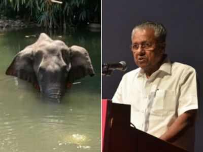 Kerala Elephant Death: CM Pinarayi Vijayan promises strict action against culprits, says three suspects in focus