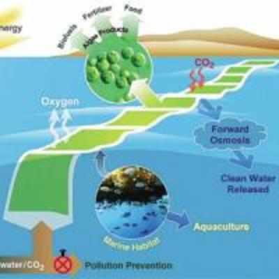 NASA plans algae farms for jet fuel