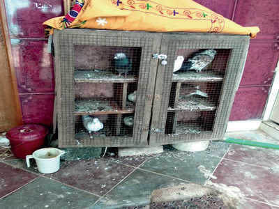 Angry birds: Neighbours row over feathered pets gets ugly