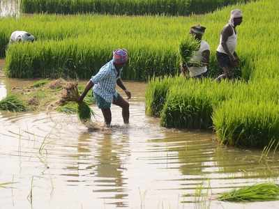 Breaking news live: Union Cabinet approves hike in MSP for kharif crops