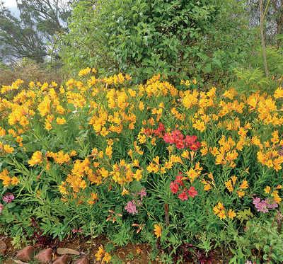 The greenskeeper: Maria flowers