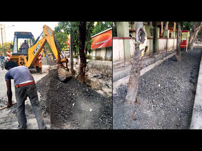 Trees concretised during road work in Charkop