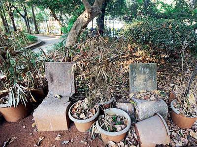 Plants wilt, garbage piles up at 250 BMC gardens