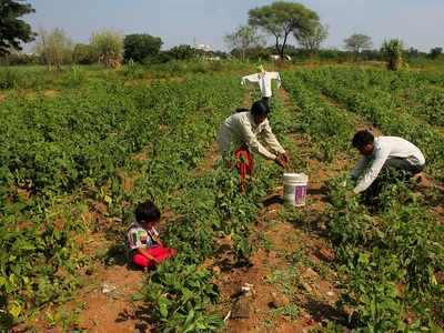 Maharashtra government to request RBI to give loans to farmers who have defaulted on crop loans
