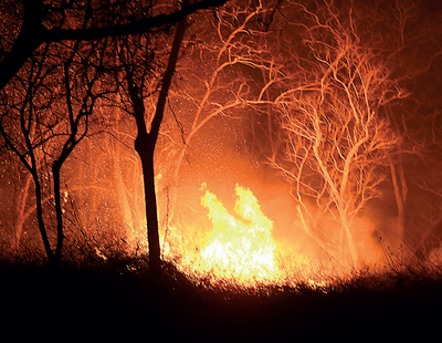 Karnataka: People asked to help douse forest fires