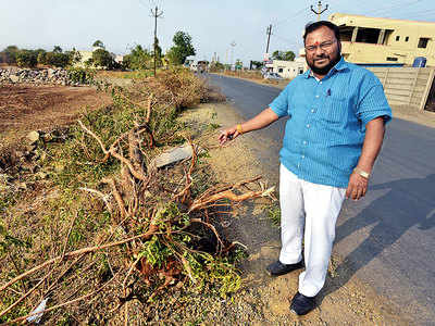 PWD illegally fells over 2,000 trees for ashtavinayak route
