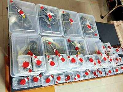 Rs 1-cr charas found hidden in apple cartons
