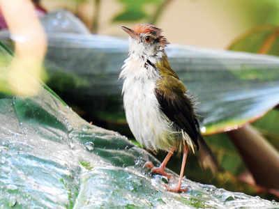 Have you heard the white-eye birds sing?