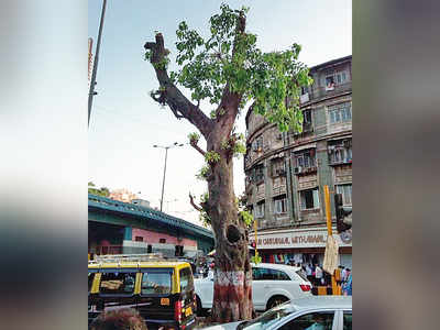 BMC's Rs 116-crore tree-trimming contract questioned by experts