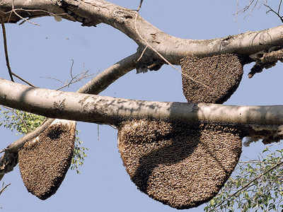 Pollution stings Bengaluru's bees in the heart