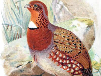 Louis Mandelli, tea planter and birdwatcher