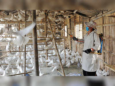 Bird flu: World's first human case of H10N3 in China