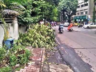 Fallen tree branches irk Bhandarkar Rd residents