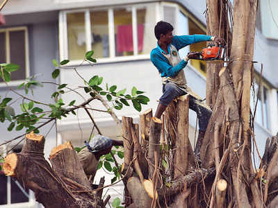 Western Railway cuts 51 trees, trims another 1,591