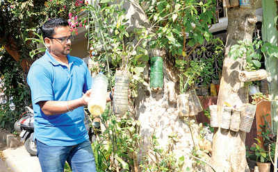 Greenie in the bottle: Man's quest for tree cover hits new high