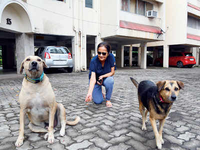 Now, dog attacked in posh KP society
