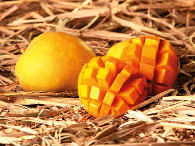 Mango bonds promise only juicy returns: Co-operative society of Alphonso orchard owners from Sindhudurg offering prized fruit instead of money as interest
