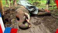 Male elephant 'Naganna' dies in Karnataka's Shivamogga