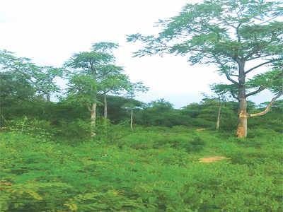 TripTease: Roughing it out in Kadapanattam
