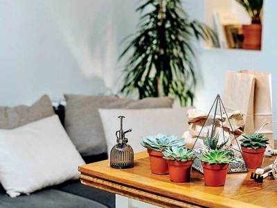 PLAN AHEAD : Grow flowers at home