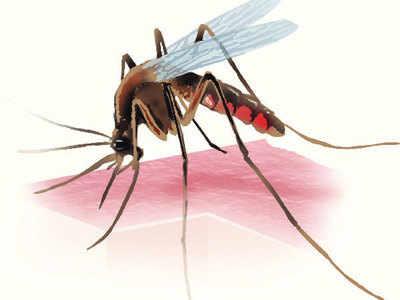 Dengue kills two boys; Ahmedabad Municipal Corporation goes on drive