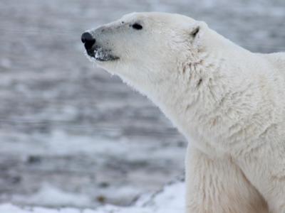 Man killed by polar bear on Norway's Arctic Svalbard islands