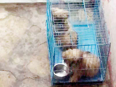 Online post on 2 cruelly caged puppies sparks a controversy