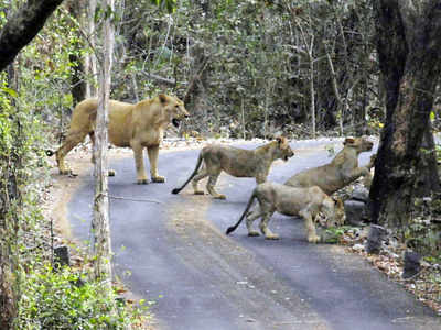 India's first overpass for animals could be derailed