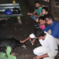 Food, shelter and regular check-ups: Bareilly protects strays this monsoon